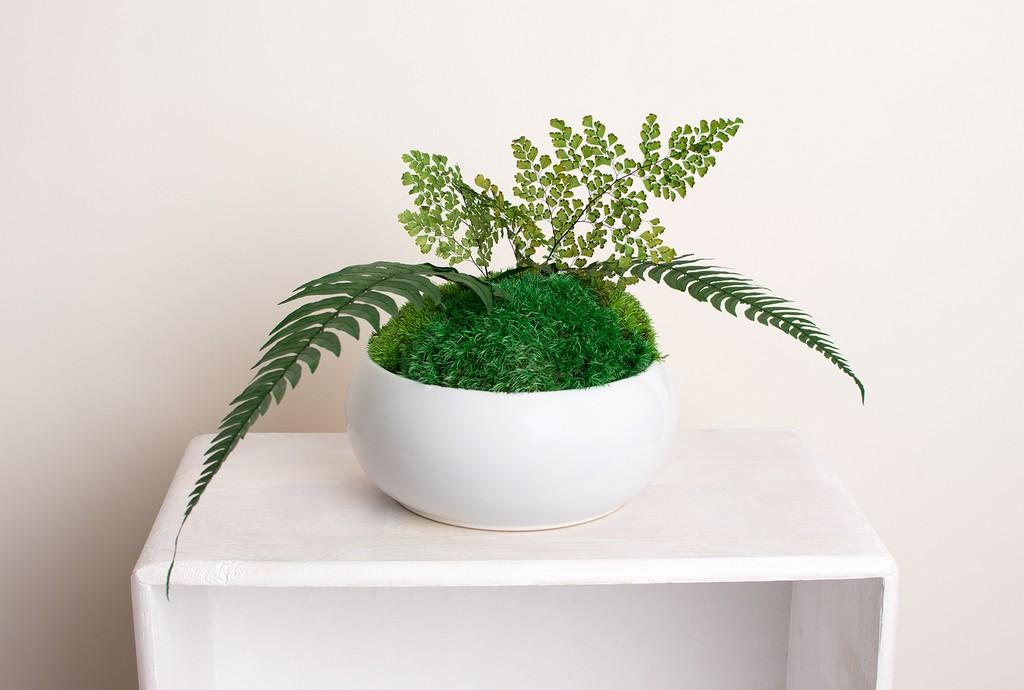 dekoracje hand made mech rośliny stabbilizowane