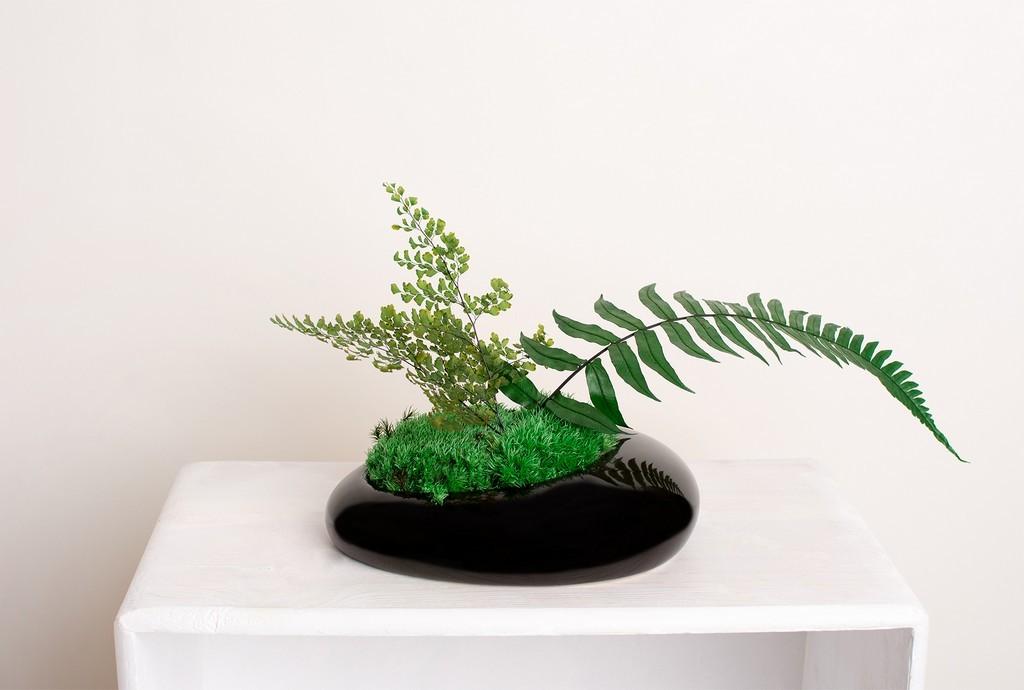 dekoracje mech rośliny stabilizowane